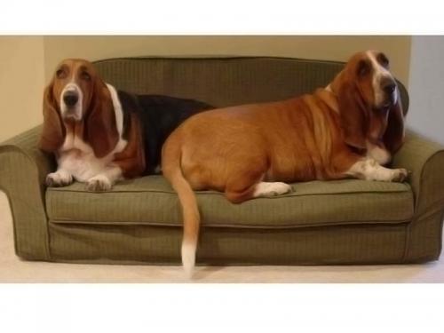 sofa văng hiện đại SF131-110 - Sofa